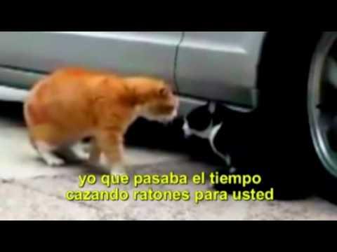 pelea de gatos subtitulado en español