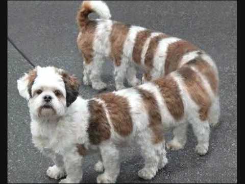 Śmieszne fotki zwierząt