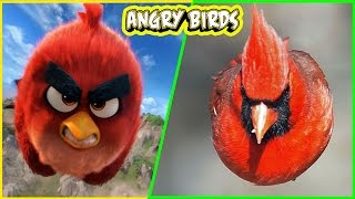 angry bird 2 all characters in real life