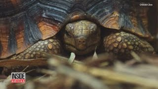 4 Rare Turtles Confiscated From Smugglers Make Public Debut