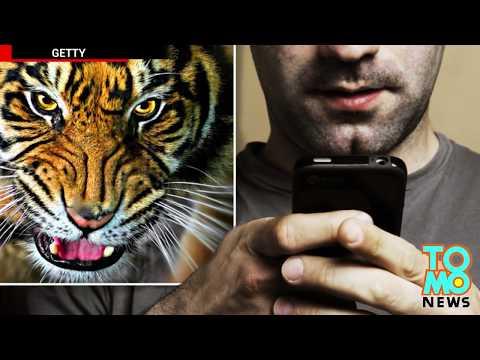 Lalake sa UK, nasira ang buhay dahil sa isang 'tiger sex' video!