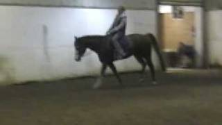 Shi and Special 2000 all- Around  APHA Gelding*FOR SALE*