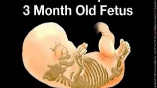 3 Months Pregnant