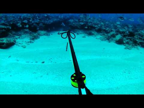 Deep Blue Hawaii Spearfishing Episode 01