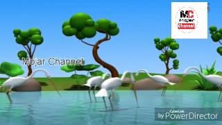Bangla new cutting video |  মূর্খ  বগ | Educational video | 2017
