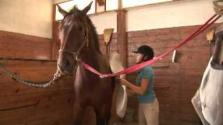Horse Care & Buying Tips : How to Break a Horse