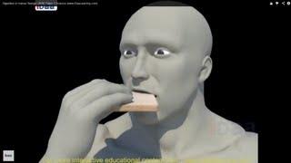 Digestion in Human Beings 3D CBSE Class 7 Science (www.iDaaLearning.com)