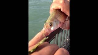 Fish bj