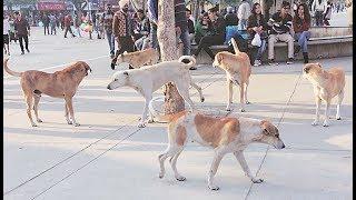 इन कुत्तों ने वो काम कर दिखाया जो एक इंसान कभी करने को सोचता तक नहीं