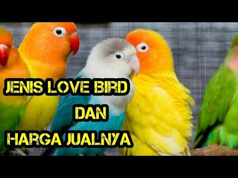 Macam - Macam Love bird dan Harganya