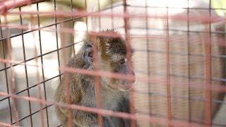Monkey BUSINE$$