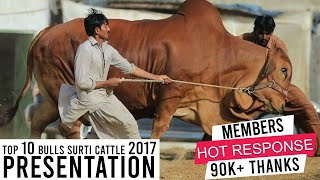 Surti Cattle Farm I Documentary I Presentation I Best Breeds And Beautiful I Parrot Studio