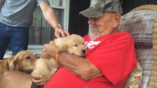 Surprising my Dad with a Golden Retriever Puppy