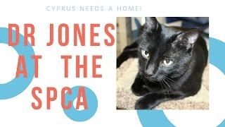 Pets Who Need Adoption