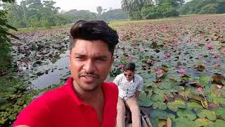 বরিশাল এর সাতলার শাপলা বিল barisal satlar sapla bil