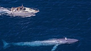 The Biggest Sea Creature : Blue Whale : Best Documentary 2017