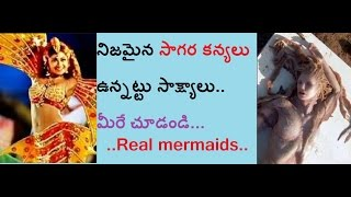 Real mermaids found