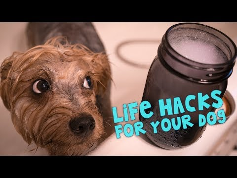 Xxx Mp4 11 Awesome Life Hacks For Your Dog 3gp Sex