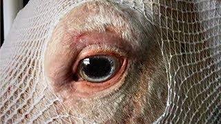 Tierschützer bekommen den Schock ihres Lebens, nachdem dubioser Besitzer sein Pferd für tot erklärt!