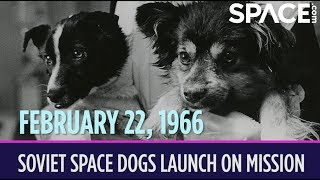 OTD in Space – February 22: Soviet Space Dogs Launch on Record-Setting Mission