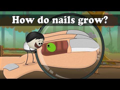 How do nails grow? | It's AumSum Time