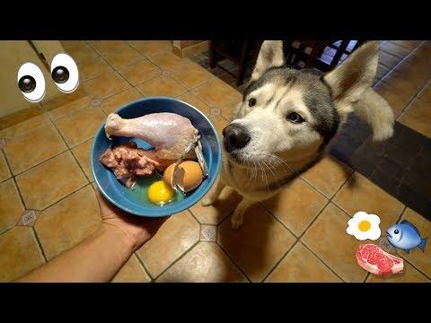 What Feeding Raw To My Husky Looks Like!