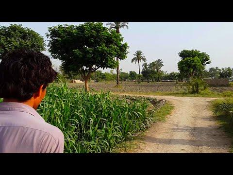Pakistani Village Life In Punjab | Tubewell Water