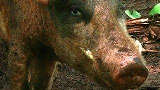 The Real Piggy Bank - Vanuatu
