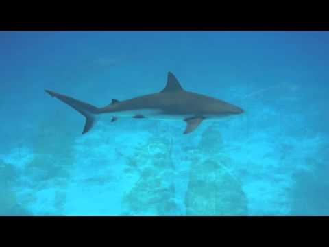 Shark Week - Scuba Diving - Exuma Bahamas