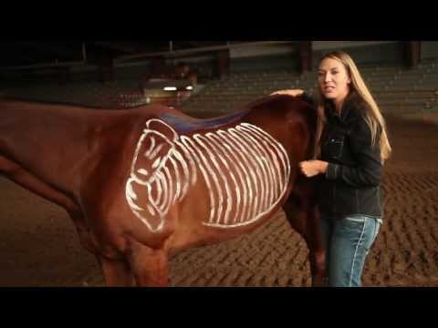 Saddle Fitting: Proper Way to Fit a Horse | Burns Saddlery, Horse Saddles, Western Saddle, Saddlery