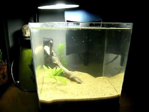 1.5 Gallon Planted shrimp tank thus far