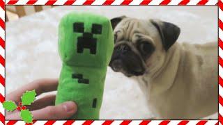 PUGS VS CREEPER!!   Vlogmas