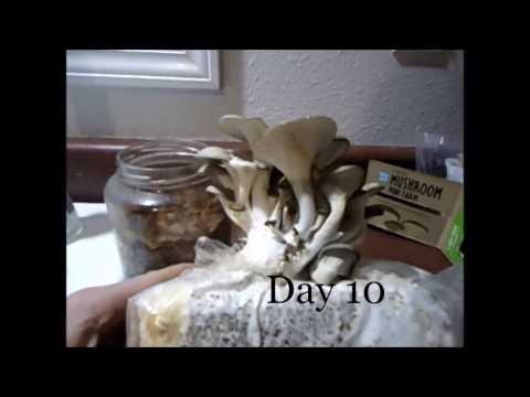 Oyster Mushroom Growing!!!