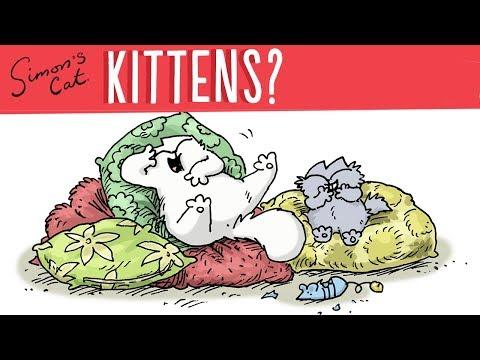 Kittens - Simon's Cat | CARE 101