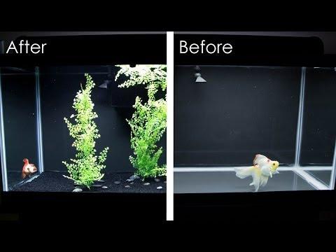 Switching Up the Goldfish Tank!