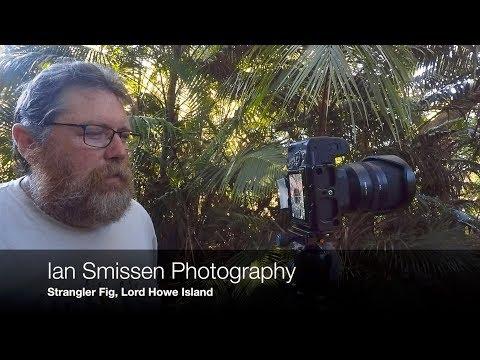 Landscape Photography #11 Strangler Fig, Lord Howe Island