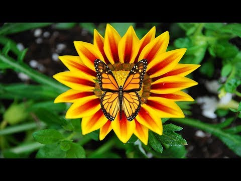 How to create a GIF | Animating Butterfly GIF | Photoshop CC Tutorial