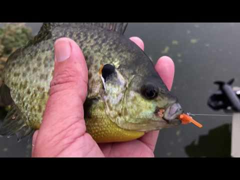 Panfishing lure tips, Lucky Tackle Box panfish boxes! Nov, Dec and Jan