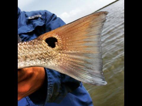 Kayak Fishing Marsh Redfish!