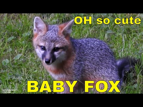 ❤️ OH so cute ~ Baby Foxes ❤️