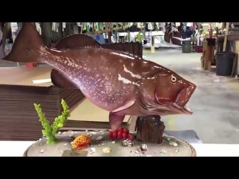 Red Grouper Custom Fishmount - Gray Taxidermy Fishmounts