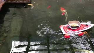 Feeding koi with my bait boat