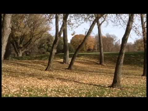 A Fall Day in Etobicoke