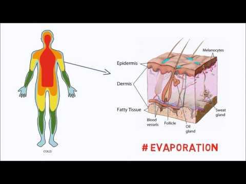 How our Bodies control Temperature