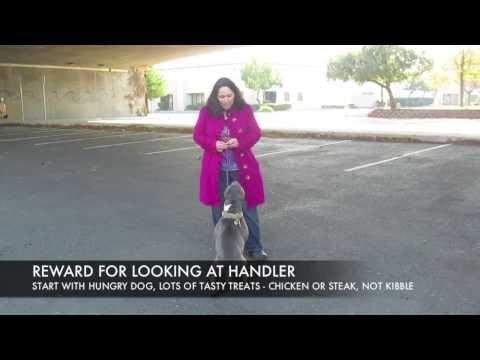 Focus work with adoptable dog Miss Ellen