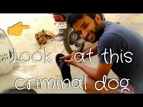 Look at this criminal dog