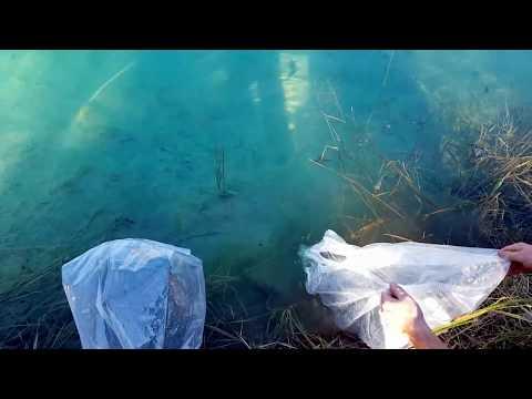 1 Acre Pond Fish Stocking