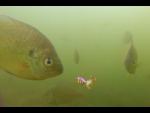 Ice Fishing Philadelphia Underwater Panfish/Bluegill/Perch 2016