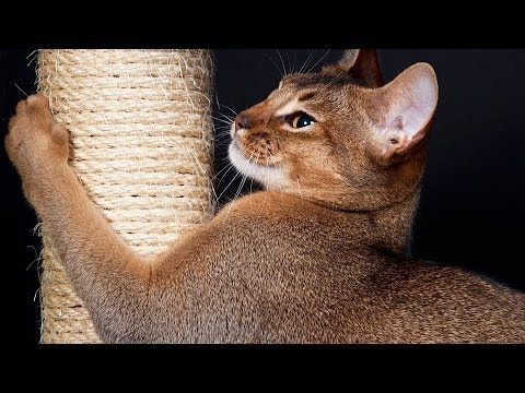 How to Keep Cat from Scratching Furniture | Cat Care