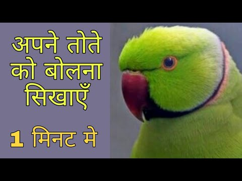 How to train your parrot to talk / world of birds